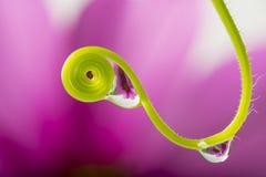roślina z podeszczowymi kroplami obrazy royalty free