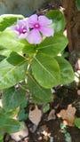 Roślina z wody stroną fotografia stock