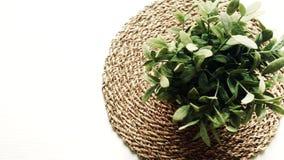 Roślina z zielenią opuszcza na białym stole zbiory