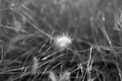 Roślina z ziemią i trawą Fotografia Royalty Free