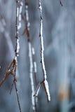 Roślina zakrywająca z hoarfrost Obrazy Royalty Free