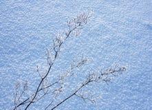 roślina zakrywający śnieg Obrazy Royalty Free
