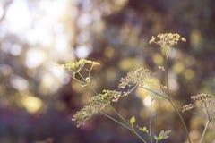 Roślina zasięg dla światła Fotografia Stock