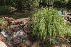 Roślina znosząca w kamiennej tamie dokąd krystaliczna woda płynie tworzący małe siklawy fotografia royalty free