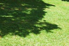 roślinność Zdjęcia Royalty Free