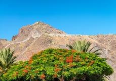 Roślinność i góry Tenerife, Hiszpania Obraz Stock