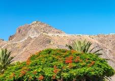 Roślinność i góry Tenerife, Hiszpania Obraz Royalty Free