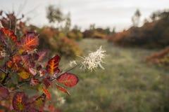 Roślinność kolory w jesieni obraz royalty free