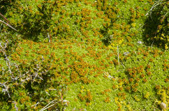 Roślinność Seno Otway Chile - Patagonia - Fotografia Stock