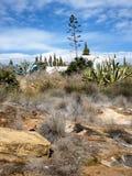 Roślinność skłon w Algarve, Portugalia Obrazy Stock