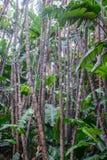 roślinność tropikalna Fotografia Royalty Free