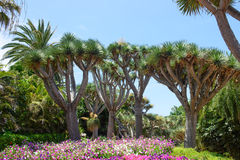 roślinność tropikalna Obraz Royalty Free