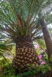 roślinność tropikalna Zdjęcie Stock