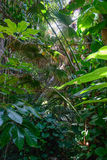 roślinność tropikalna Zdjęcie Royalty Free