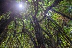 roślinność tropikalna Obraz Stock