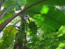 Roślinność tropikalna dżungla obrazy royalty free