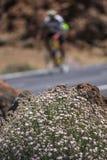 Roślinność w sposobie Teide wulkan, Canarian wyspa, Hiszpania Zdjęcia Stock