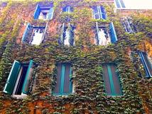 Rośliny ściana Obraz Stock