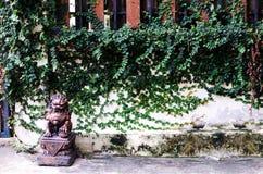 Rośliny ściana Fotografia Royalty Free