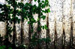 Rośliny ściana Fotografia Stock