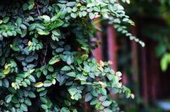 Rośliny ściana Obrazy Royalty Free