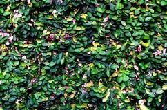 Rośliny ściana Zdjęcie Royalty Free