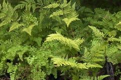 Rośliny ściana paprocie zdjęcia stock