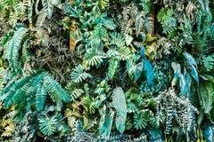 Rośliny ścienny tło dla zewnętrznej dekoraci Zdjęcie Royalty Free