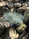 Rośliny żyje w skalistej górze Zdjęcia Stock