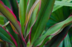 Rośliny abstrakcjonistyczna miękka ostrość Fotografia Stock