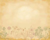 Rośliny barwią nakreślenie ustawiającego na grunge i podławym tle ilustracji