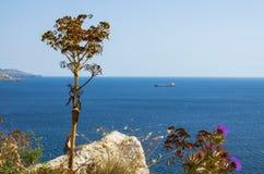 Rośliny brzeg jako statek zakotwiczają w tła morzu Obraz Royalty Free