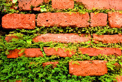 rośliny ceglana ściana Obrazy Royalty Free