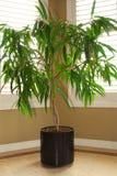 rośliny domowe Obrazy Stock