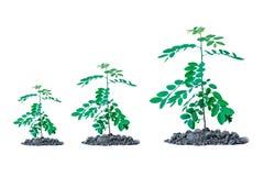 Rośliny dorośnięcia odosobniony tło obraz royalty free