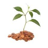 Rośliny dorośnięcie Zdjęcie Stock