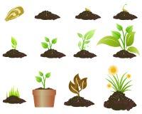 Rośliny dorośnięcie royalty ilustracja