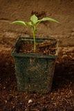 Rośliny dorośnięcie Zdjęcia Royalty Free