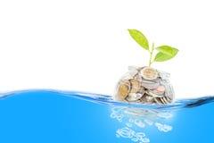 Rośliny dorośnięcie od Savings monet Ratować i interesu pojęcie Zdjęcie Royalty Free