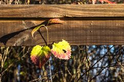 Rośliny dorośnięcie przed poręczem Fotografia Royalty Free
