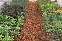 rośliny dorośnięcie w jarzynowym ogródzie glebowa kultywacja Agricultura Zdjęcia Stock