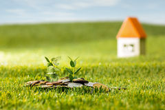 Rośliny dorośnięcie w moneta szklanym słoju dla pieniądze na zielonej trawie obrazy stock