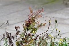 Rośliny dorośnięcie w ogródzie Obrazy Royalty Free