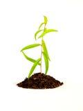 Rośliny dorośnięcie w ziemi Zdjęcia Royalty Free