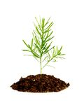 Rośliny dorośnięcie w ziemi Zdjęcie Stock
