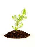 Rośliny dorośnięcie w ziemi Obrazy Stock