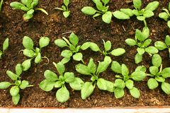 rośliny gazów cieplarnianych Zdjęcia Royalty Free