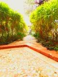 Rośliny i ścieżka w ranku Obraz Royalty Free