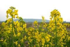 Rośliny i światło słoneczne zdjęcie stock