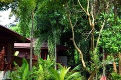 Rośliny i dżungla przy kurortem w Thailand Zdjęcia Stock